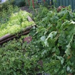 Epic Vegetable Garden 2012: Epic Hail Fail